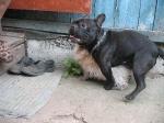 собака марсика(БОНЯ)